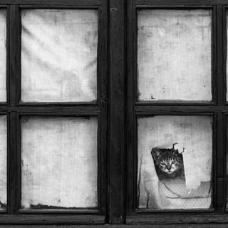 animals-looking-through-the-window-3