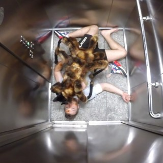 dog-spider-prank-sa-wardega-1