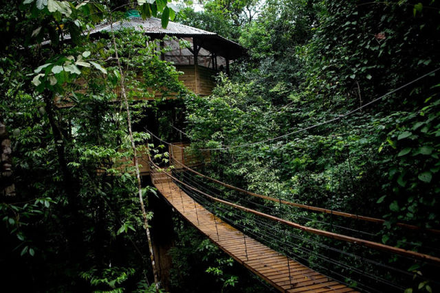 experience_treehouse_living_in_forested_costa_rica_resort_640_13