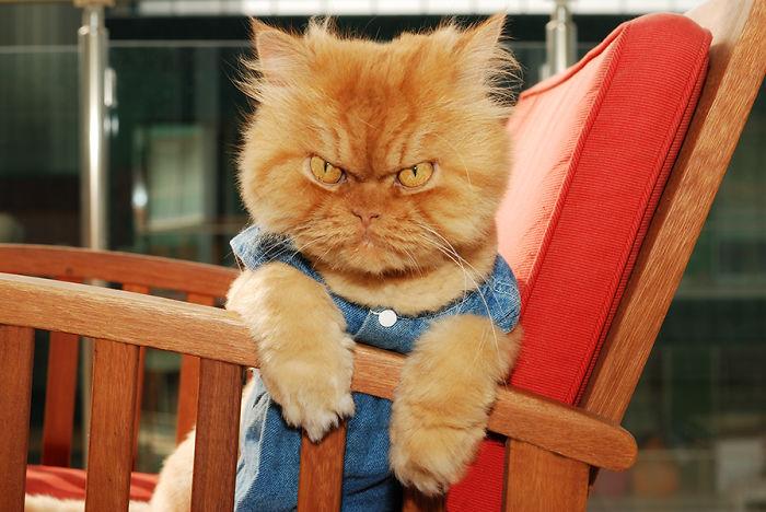 garfi-evil-grumpy-persian-cat-12__700