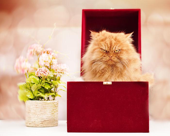 garfi-evil-grumpy-persian-cat-25__700