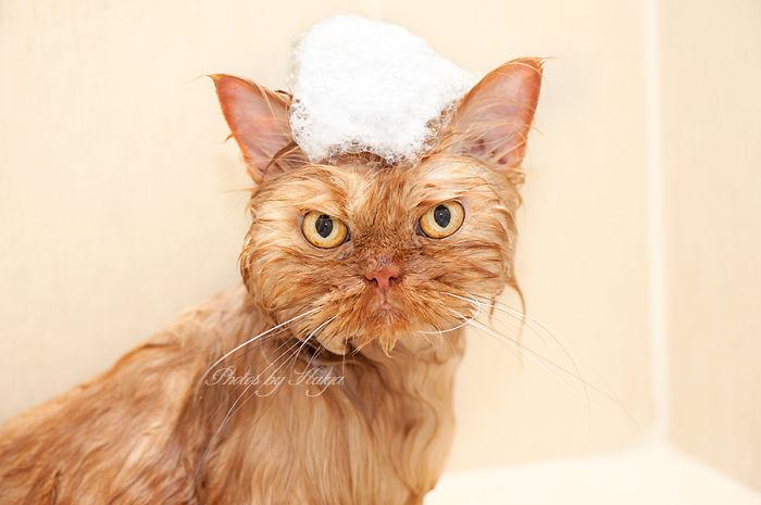 garfi-evil-grumpy-persian-cat-37__700