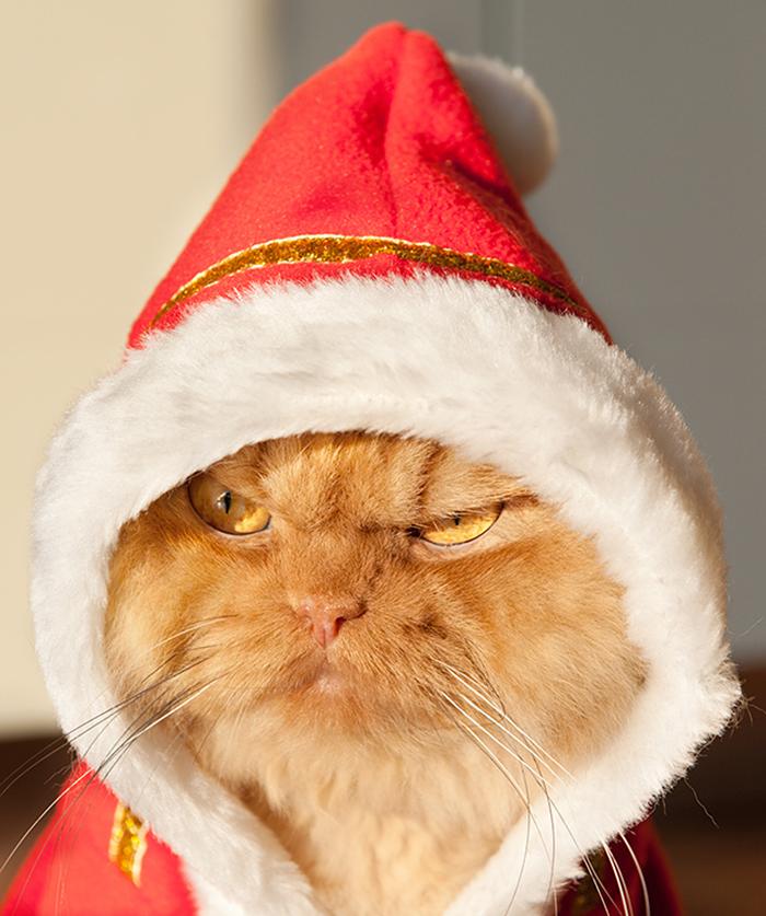 garfi-evil-grumpy-persian-cat-6__700
