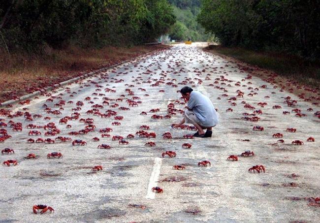 crab-2