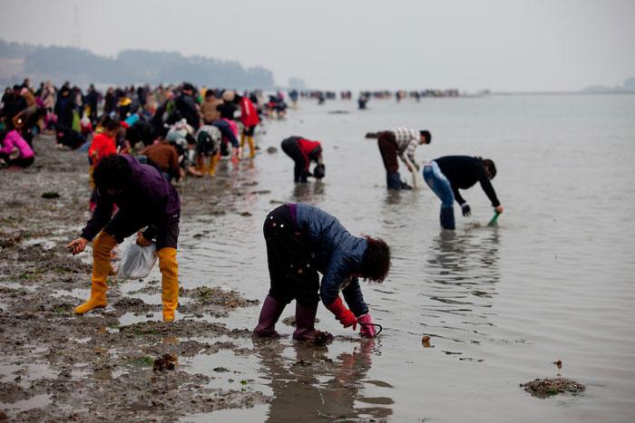 jindo-festival-korea-selatan-3