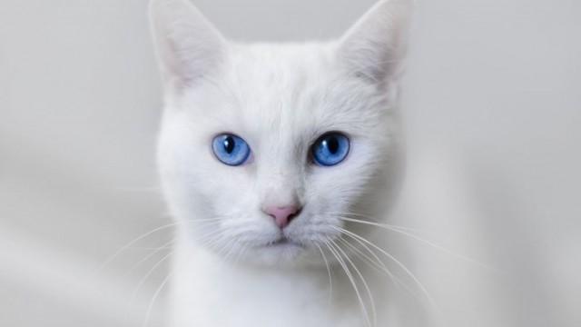cat interpreter