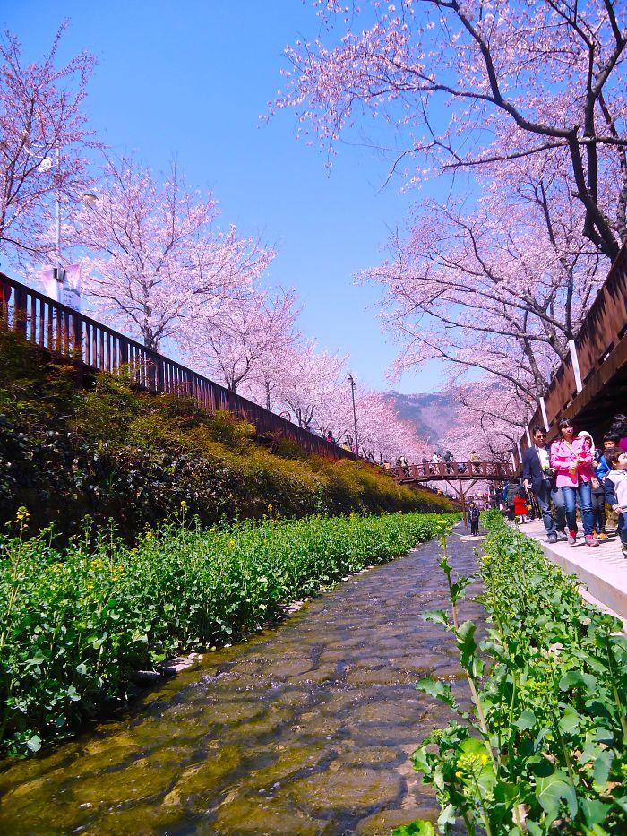 jinhe korea selatan