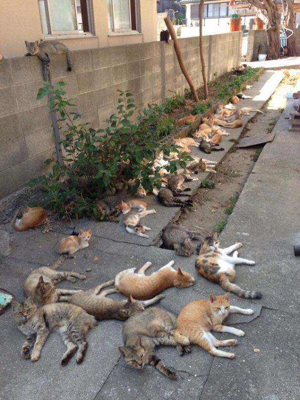 cat-island-infestations-japan-2