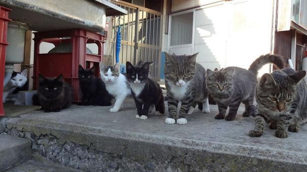 cat-island-infestations-japan