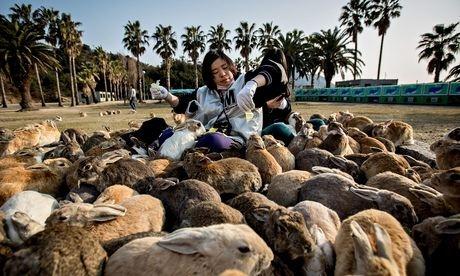 rabbit-island-japan-2