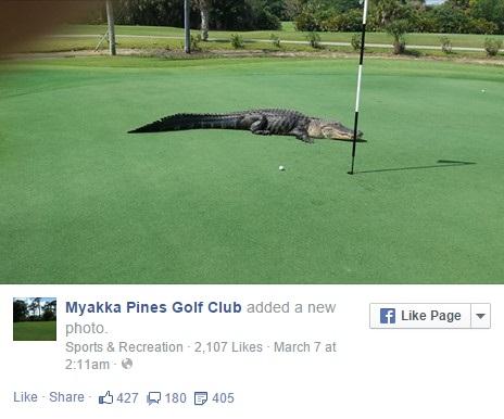 buaya golf