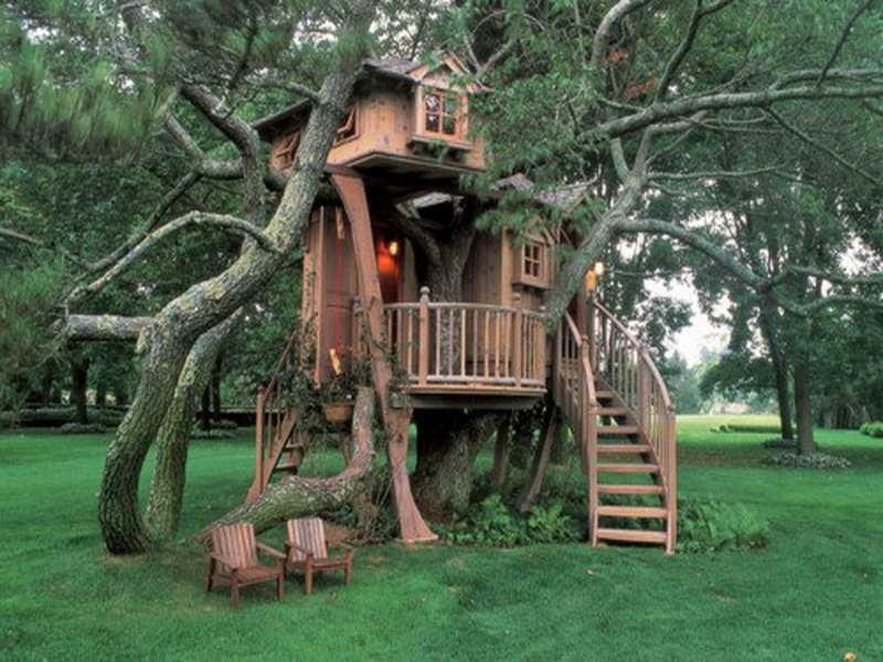 Tree-House-on-Pine-Tree