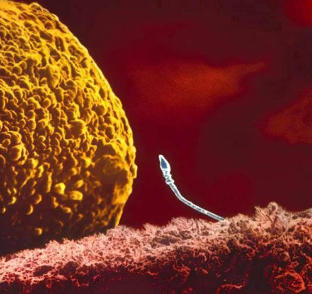 embrio-2