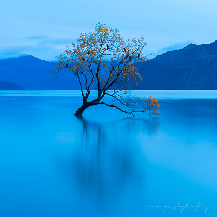 That Wanaka Tree before the sun rises