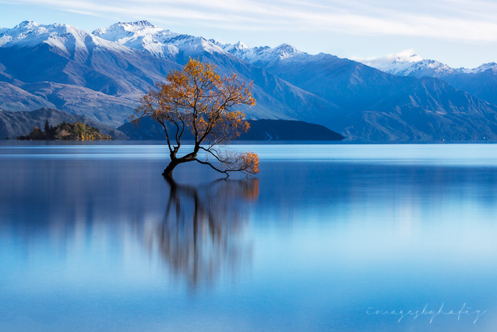 Lone Willow Tree Reflection on a calm morning