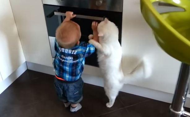 kucing-pandai