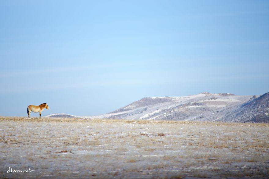 musim-sejuk-di-mongolia-12