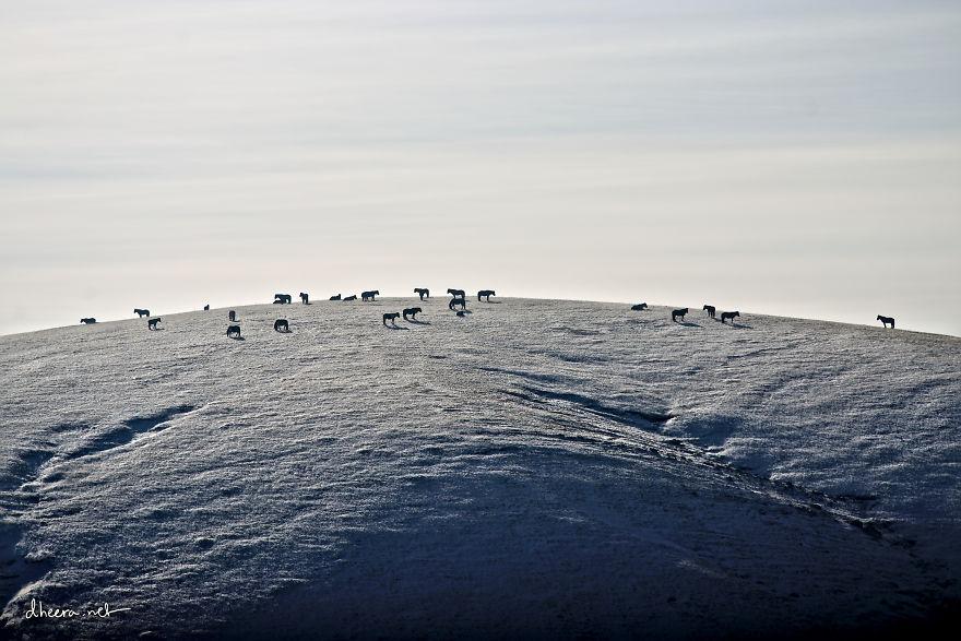 musim-sejuk-di-mongolia-13