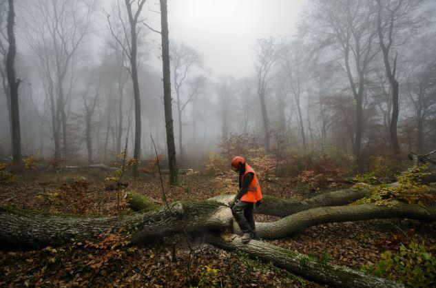 ikea-membeli-tanah-hutan