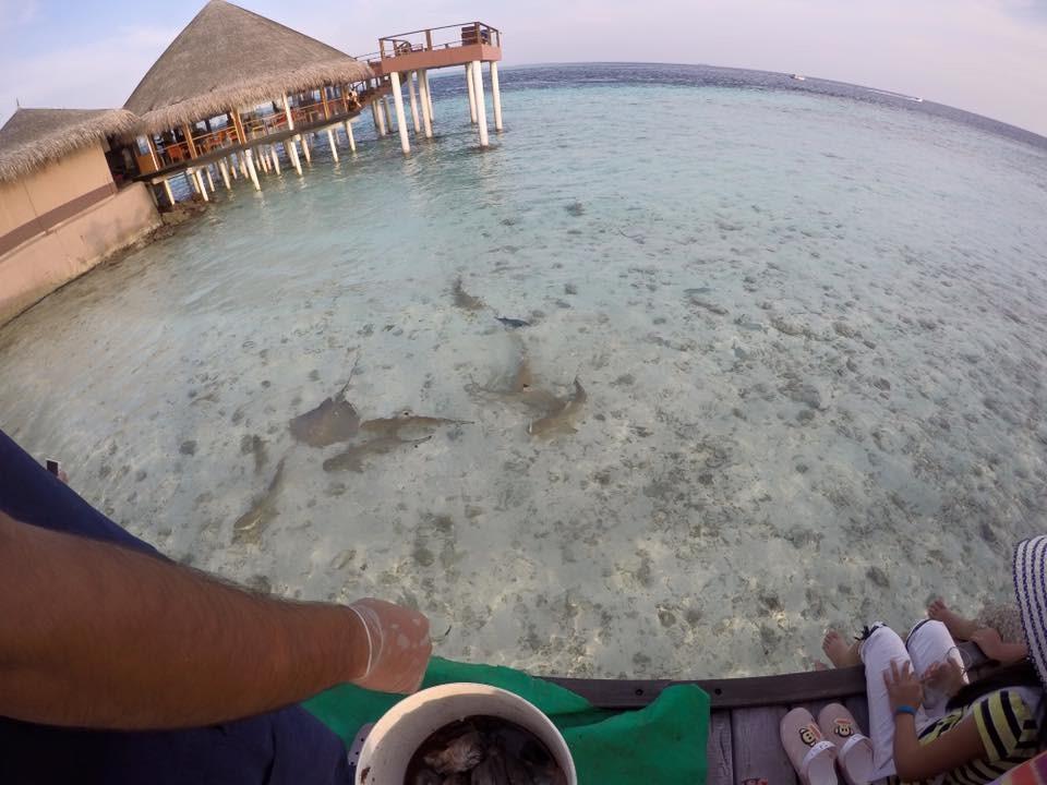 bercuti-di-maldives-9