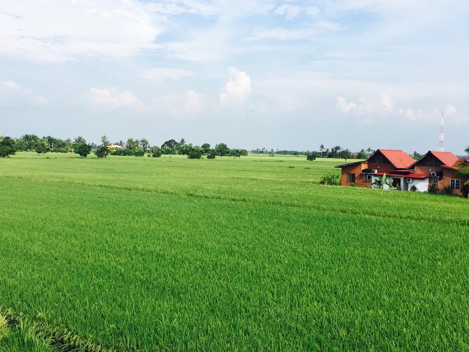 5 Homestay Dengan Pemandangan Sawah Padi Yang Indah Di Selangor
