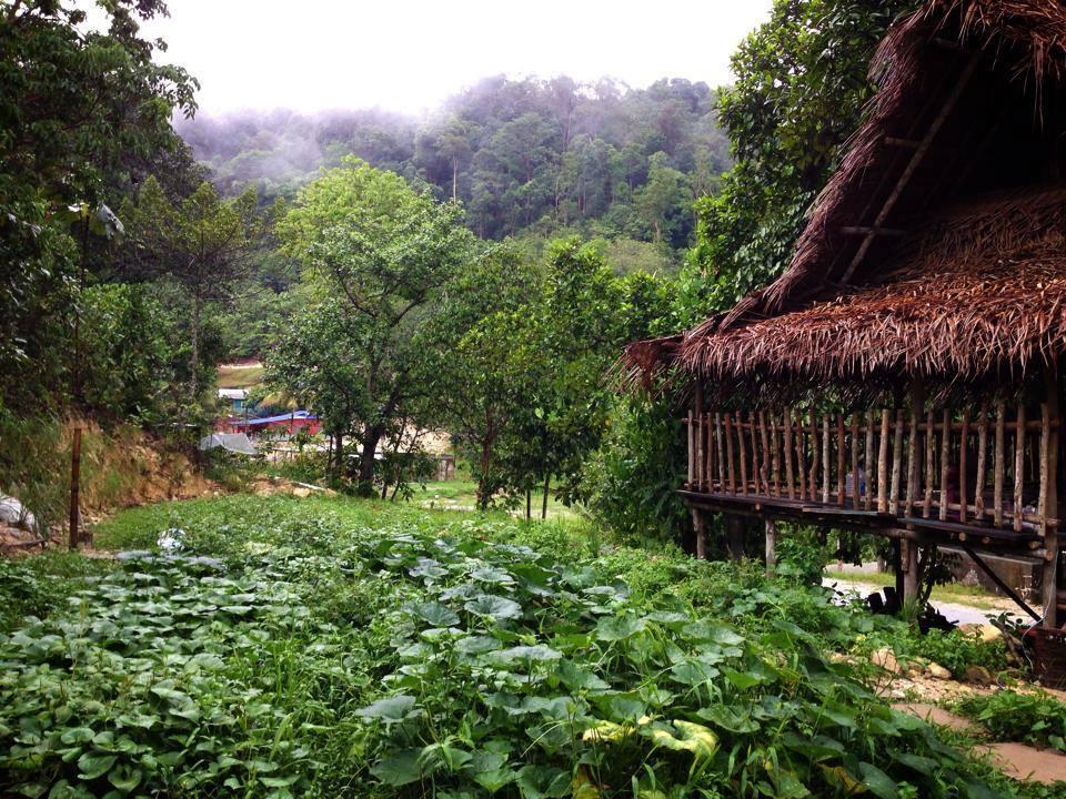Rainforest Tree House (11)