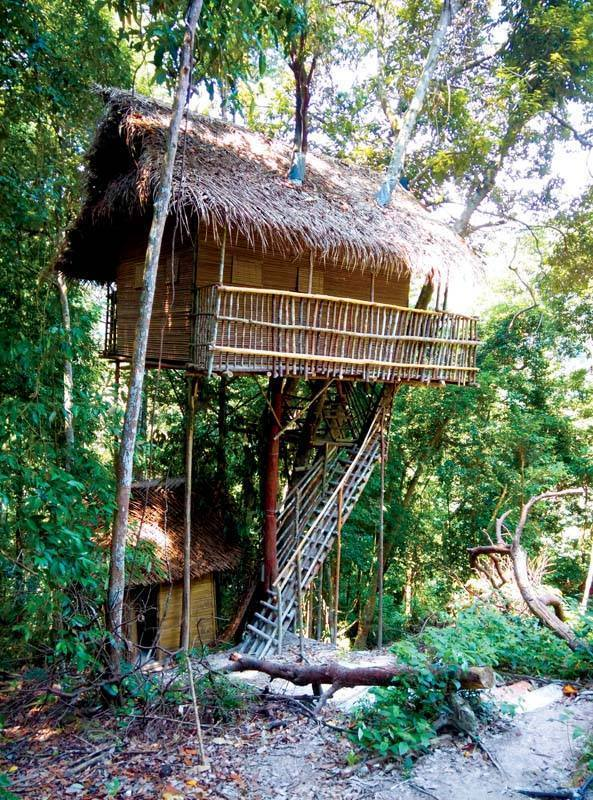 Rainforest Tree House (4)