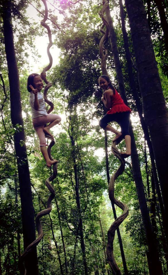 Rainforest Tree House (6)