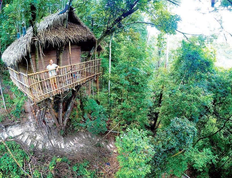Rainforest Tree House (9)