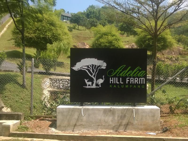 Adelia Hill Farm sentiasa menunggu anda.