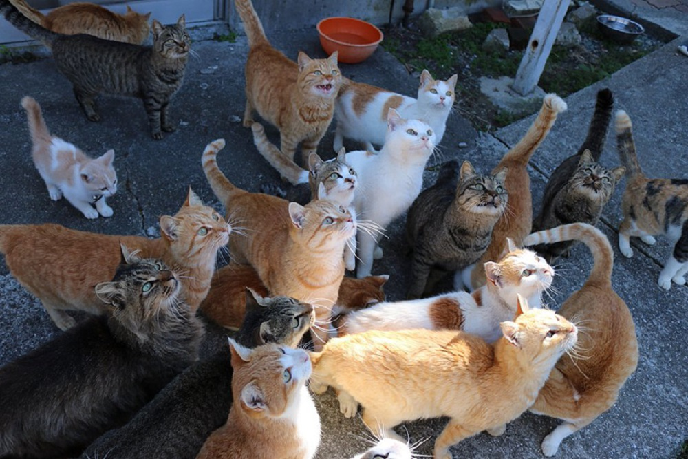 cat-island-japan-tweet-food-donation-aoshima-15