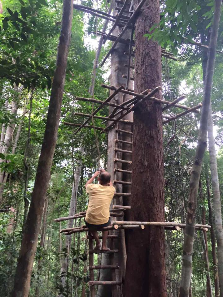 Rainforest 01