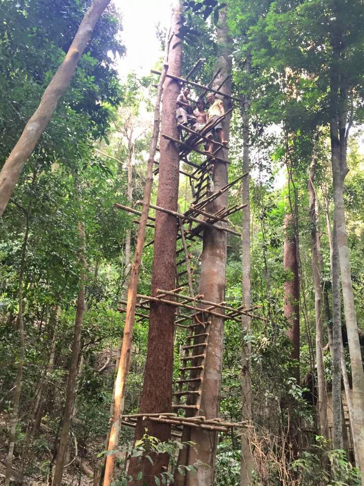 Rainforest 02