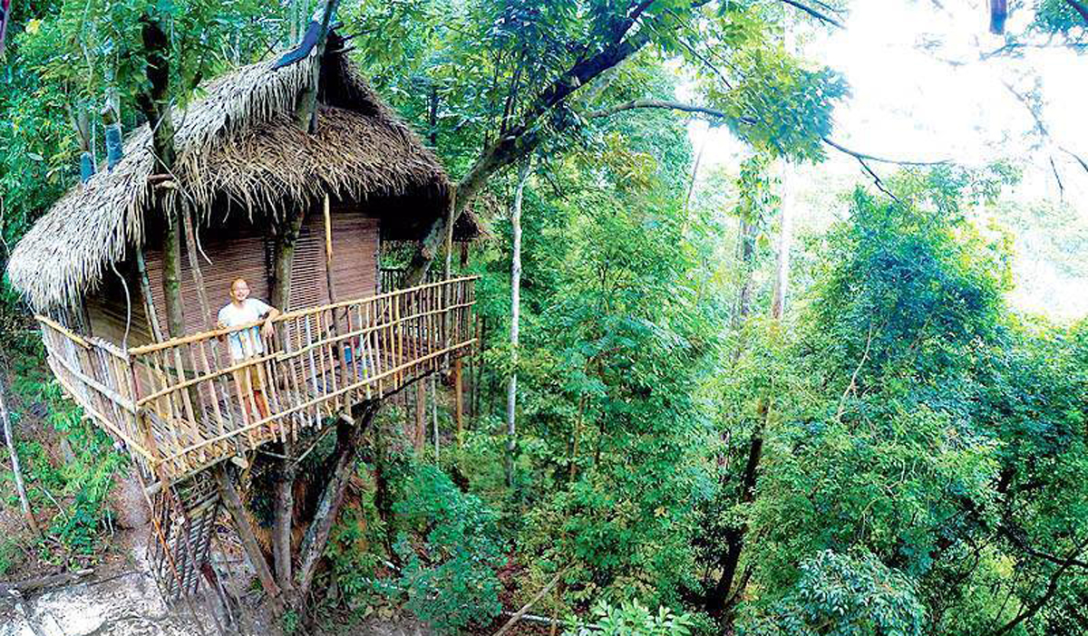 Rainforest-Tree-House-9 Crop