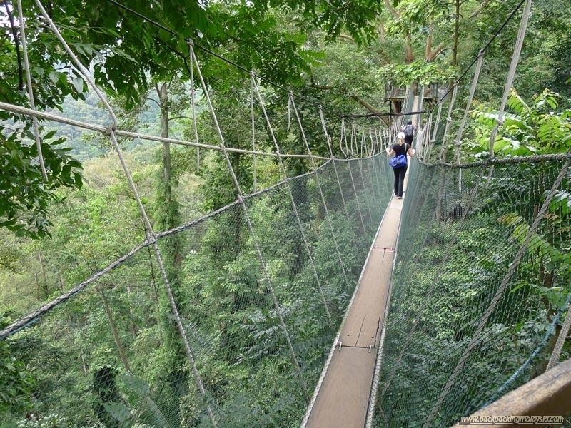 canopy-walk-kepong
