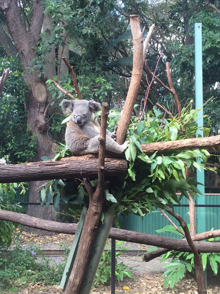 tip-melancong-ke-gold-coast-australia-15