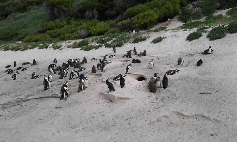 tip-travel-di-afrika-selatan-18