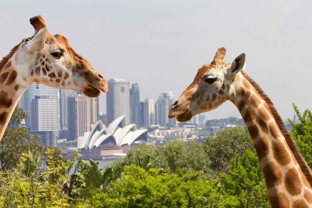 toranga-zoo-sydney-1