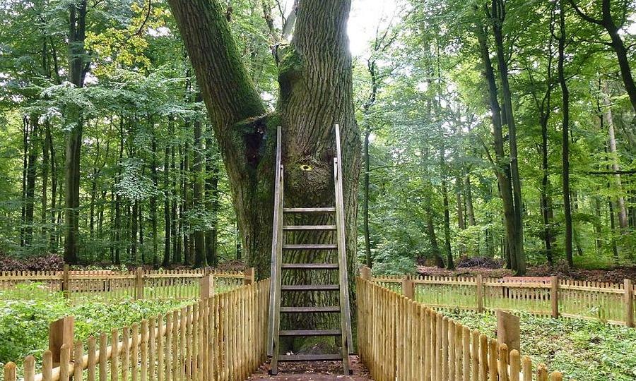 pokok jodoh