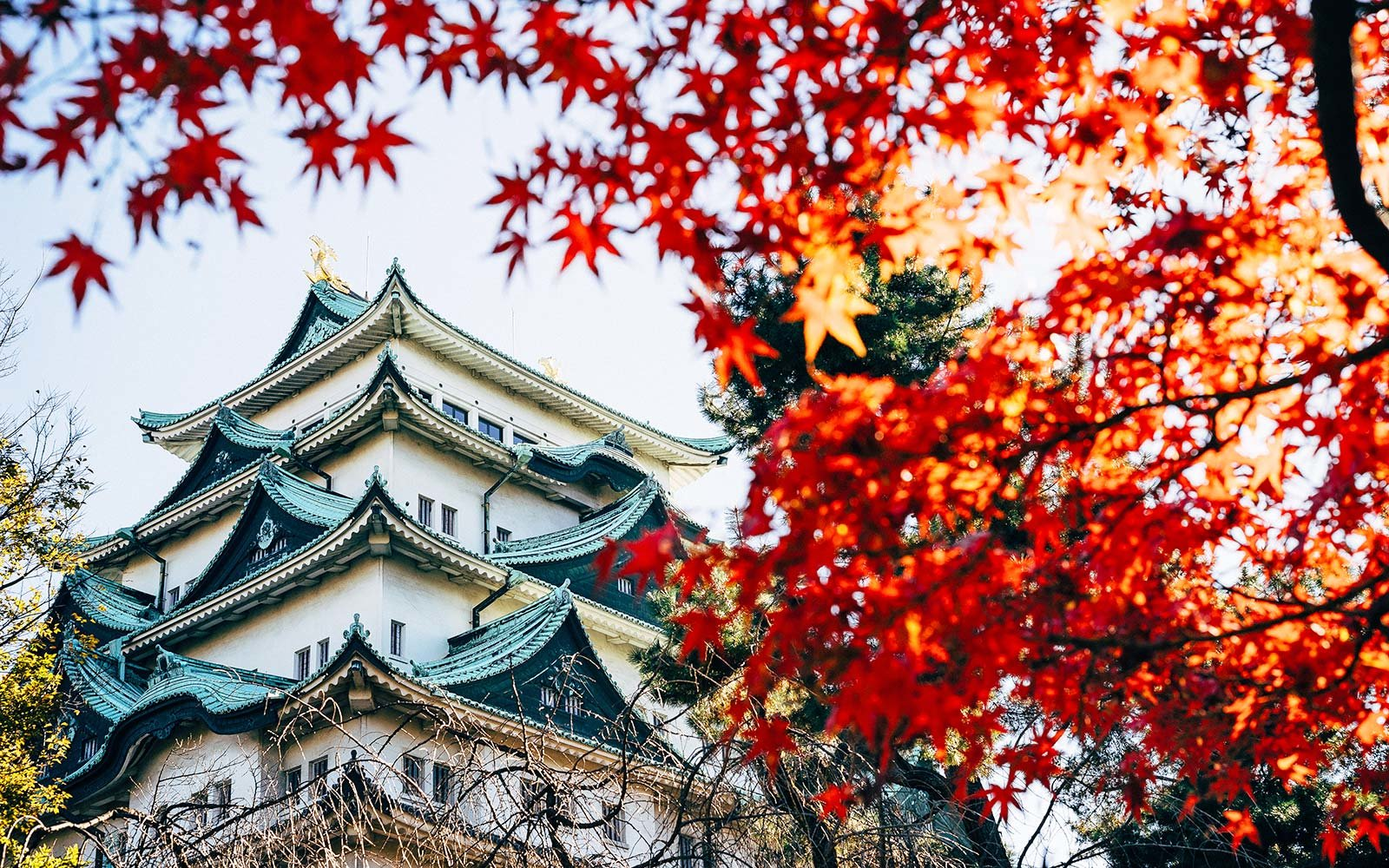 Nagoya castle autumn leaves