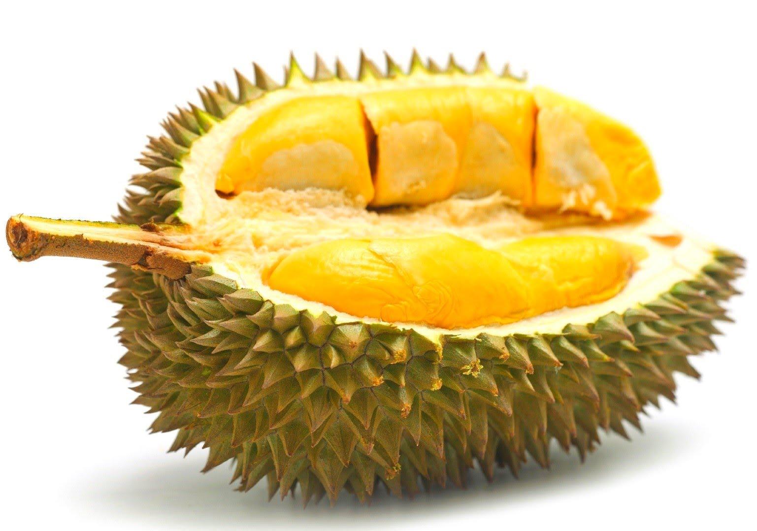 elianto-gincu-durian