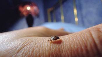 wbz-all-about-bedbugs