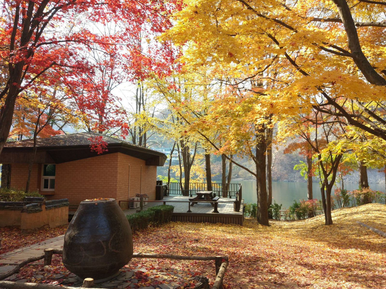 Nami-Island-in-Autumn-gold