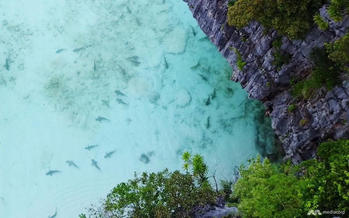 maya bay shark