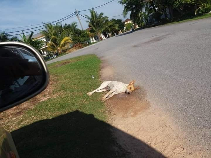 Doggo Seremban