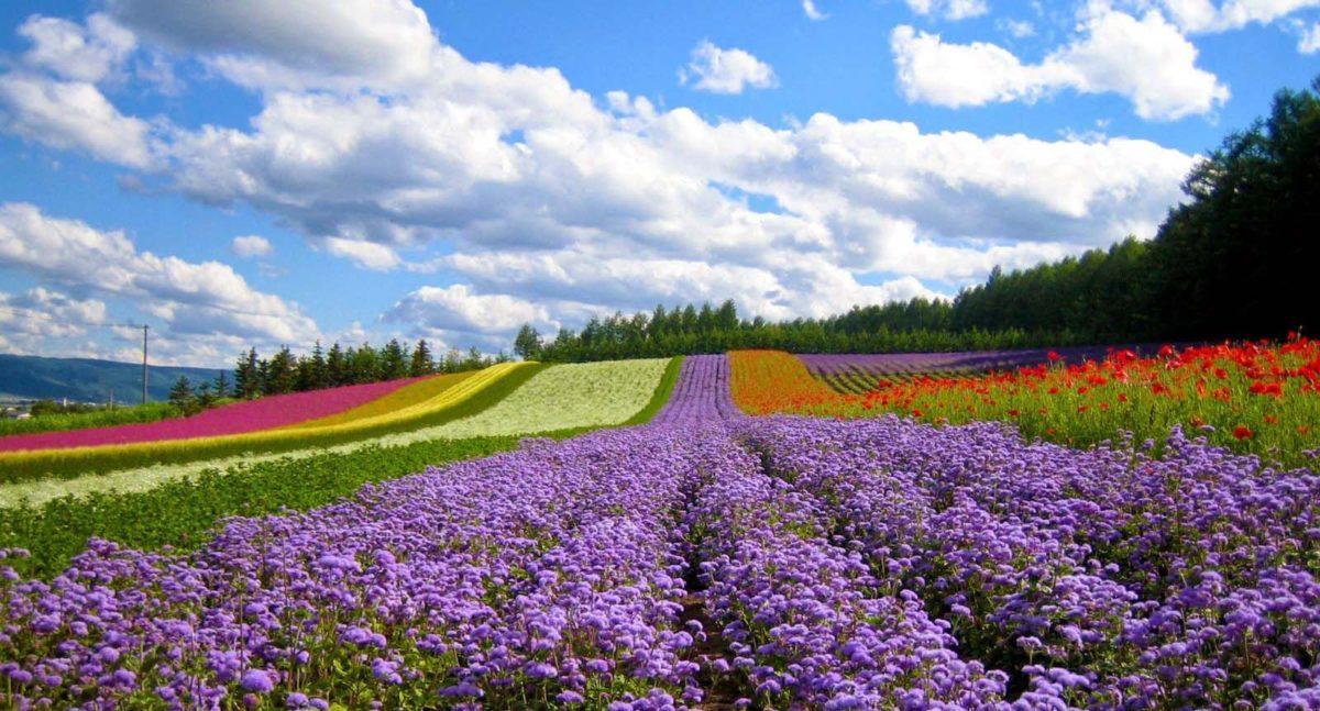 flower-garden-dalat