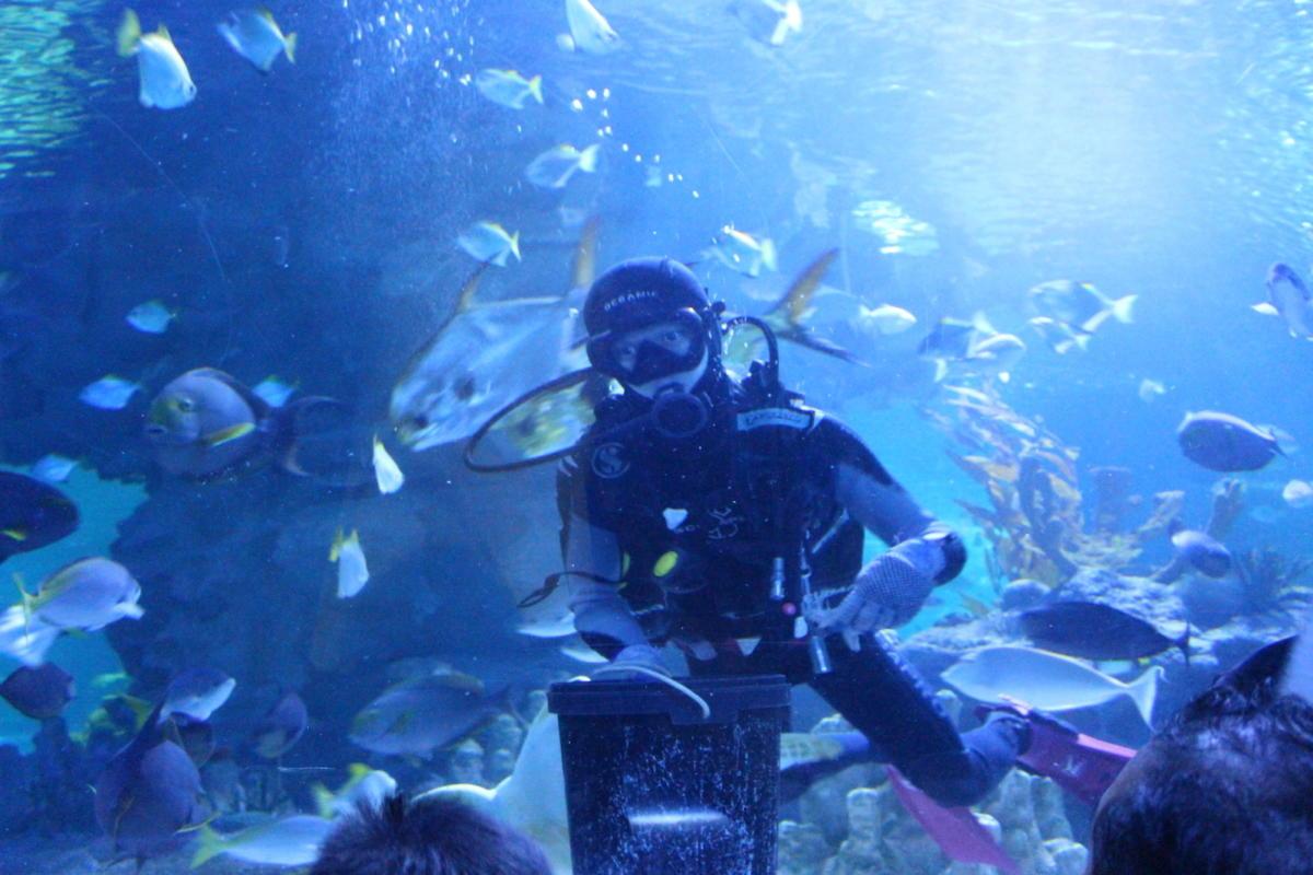 aquaria-53