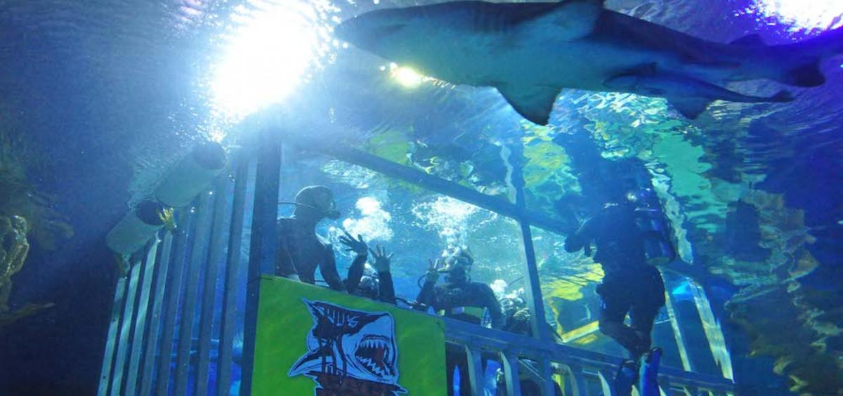 aquaria-klcc-04-1214×571@2x