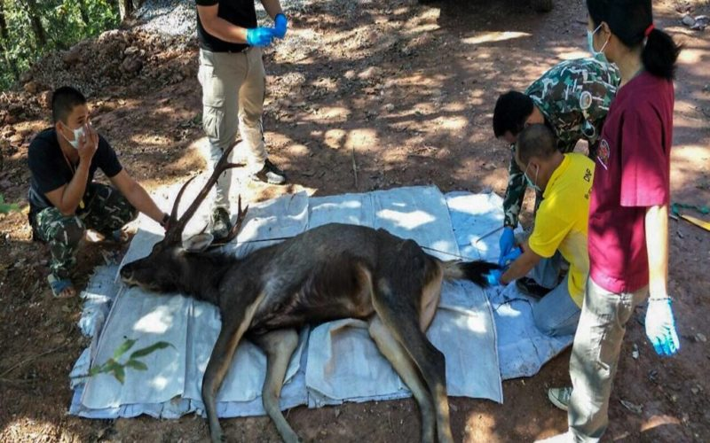 Dead-deer-found-in-thailand-with-7kg-of-plastic-in-stomach-AFP-800×500