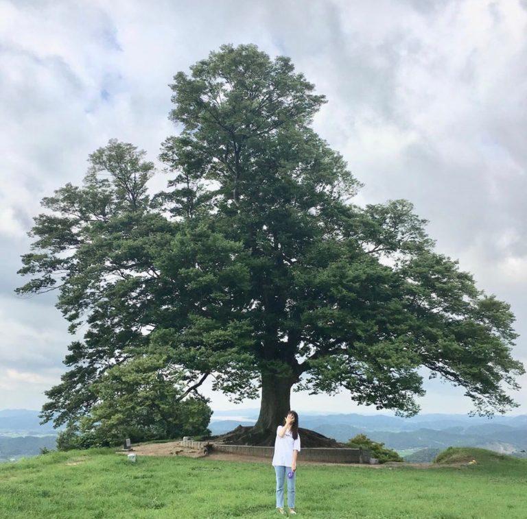 sarang-tree-768×757